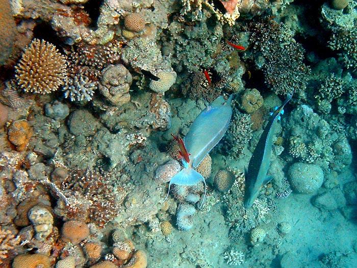 Асины персональные фотки :: подводные фото :: 00687_G