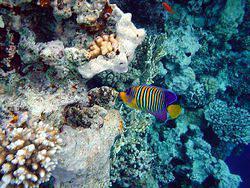 Рыбы Красного моря.  Фоторепортажи.  2003 год.